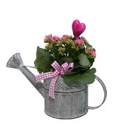 Arrangement with potted flowers (IS0001)