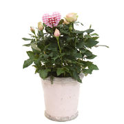 Arrangement with potted flowers (IS0002)