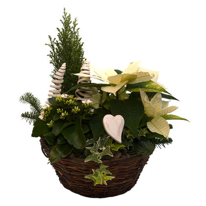 Christmas arrangements with potted flowers (JIS0005)
