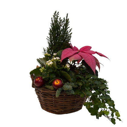 Christmas arrangements with potted flowers (JIS0006)
