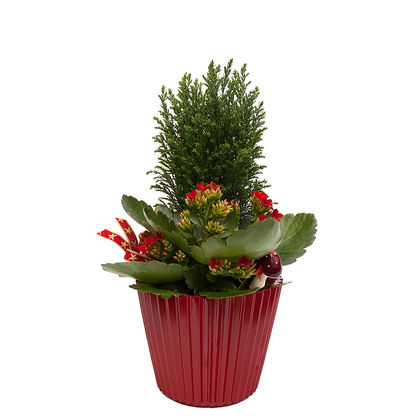 Christmas arrangements with potted flowers (JIS0024)