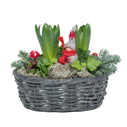 Christmas arrangements with potted flowers (JIS0033)