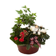 Christmas arrangements with potted flowers (JIS0002)