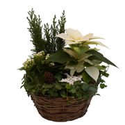 Christmas arrangements with potted flowers (JIS0004)
