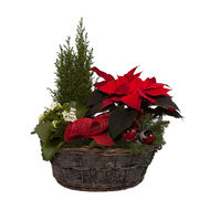 Christmas arrangements with potted flowers (JIS0007)