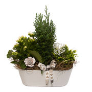Christmas arrangements with potted flowers (JIS0018)