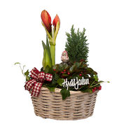Christmas arrangements with potted flowers (JIS0027)