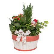 Christmas arrangements with potted flowers (JIS0032)