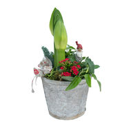 Christmas arrangements with potted flowers (JIS0036)