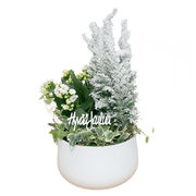 Christmas arrangements with potted flowers (JIS0047)