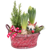 Christmas arrangements with potted flowers (JIS0048)