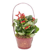 Christmas arrangements with potted flowers (JIS0049)