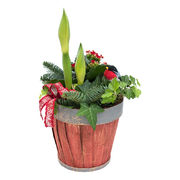 Christmas arrangements with potted flowers (JIS0050)