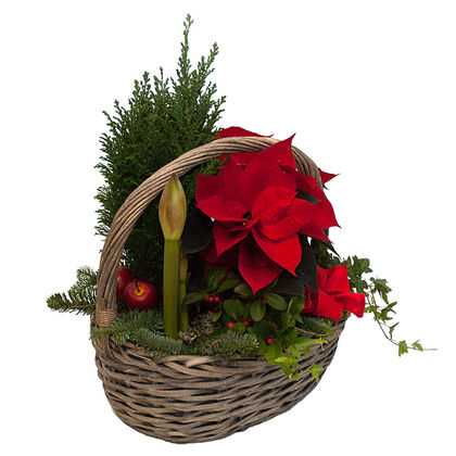Christmas arrangements with potted flowers (JIS0014)