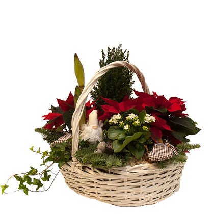 Christmas arrangements with potted flowers (JIS0015)