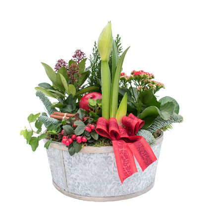 Christmas arrangements with potted flowers (JIS0040)