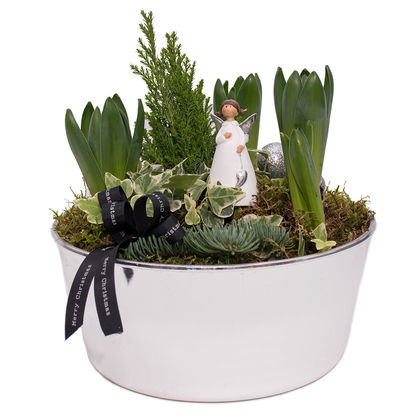 Christmas arrangements with potted flowers (JIS0053)
