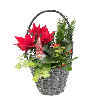 Christmas arrangements with potted flowers (JIS0054)