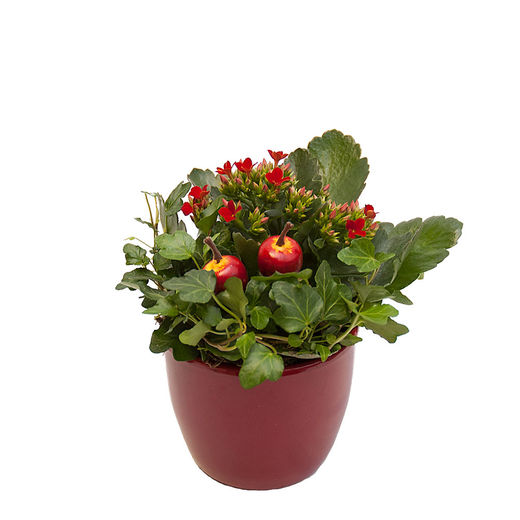 Christmas arrangements with potted flowers (JIS0017)