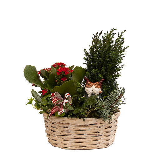 Christmas arrangements with potted flowers (JIS0021)
