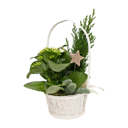 Christmas arrangements with potted flowers (JIS0034)