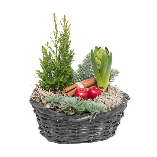 Christmas arrangements with potted flowers (JIS0035)