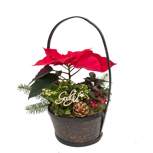 Christmas arrangements with potted flowers (JIS0037)