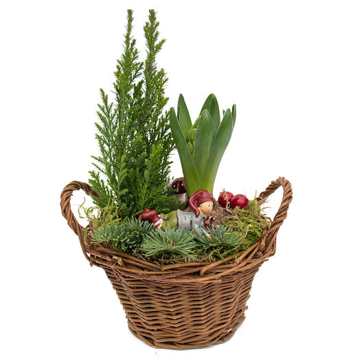 Christmas arrangements with potted flowers (JIS0038)