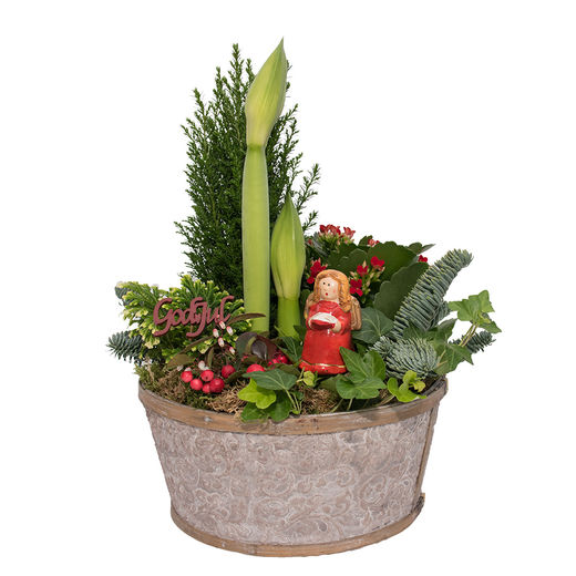 Christmas arrangements with potted flowers (JIS0044)