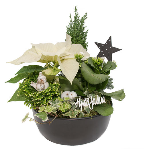 Christmas arrangements with potted flowers (JIS0051)