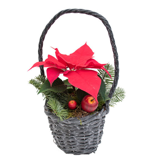 Christmas arrangements with potted flowers (JIS0055)